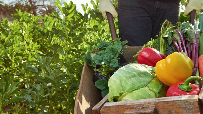 19 Ways To Save Money During A COVID-19 Quarantine - Grow your own food