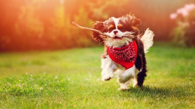 Millennials Are Extra Aware Of The Importance Of Pet Care - Here's Why - How can you take better care of your pet?