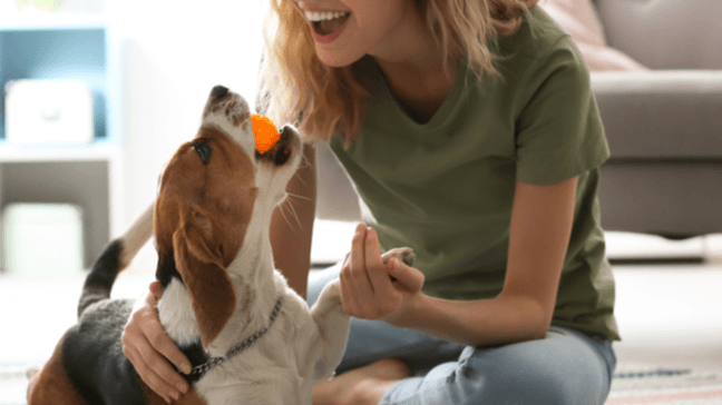 20 Affordable Ways To Spoil Your Fur Child On National Dog Day - National Dog Day deals