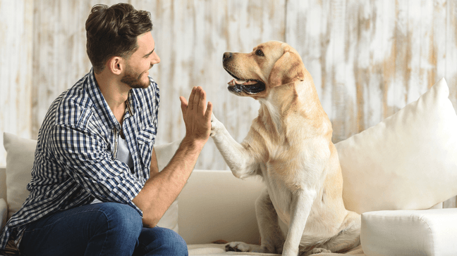 Do Homebuyers Buy Homes With Their Pets In Mind? - Homebuyers buy homes with their pets in mind